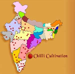 chilli cultivation in india pdf