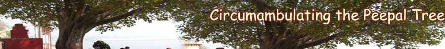 Circumambalating Peepal Tree