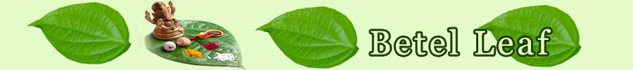 Significance Of Betel Leaf