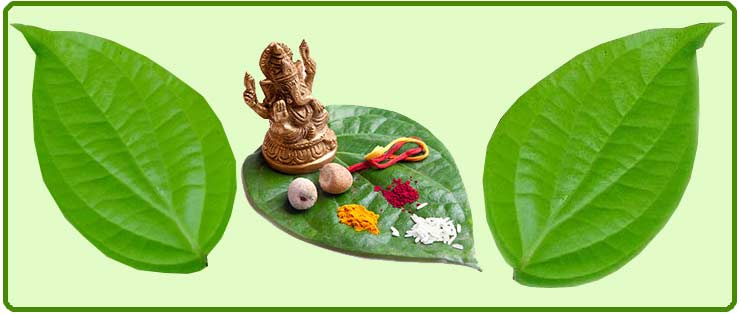SIGNIFICANCE OF BETEL LEAF-INDIANMIRROR