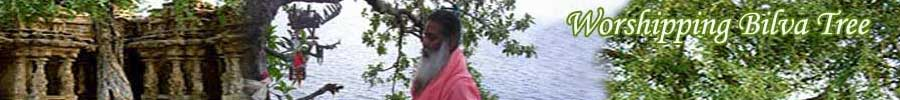 Worshipping Bilva Tree
