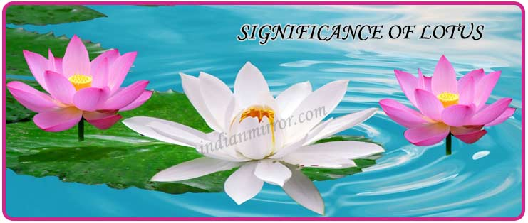 Singnificance of lotus as a special flower indianmirror significance of lotus flower home indian culture mightylinksfo