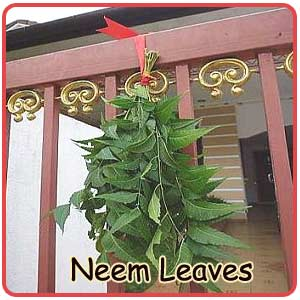 TYING OF NEEM LEAVES AT THE ENTRANCE OF THE HOUSE-INDIANMIRROR