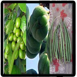 Andaman and Nicobar - cuisine