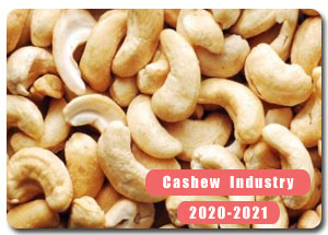 2020-2021 Indian Cashew Industry