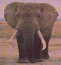ELEPHANT USED