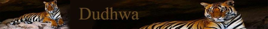 dudhwa