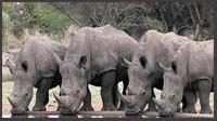 Women Kazakhstan Asian rhinoceros population